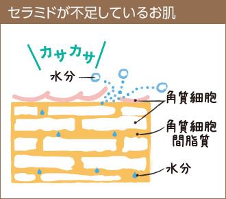 セラミドが不足しているお肌は、うるおいを保持できずカサカサに乾燥してしまいます。